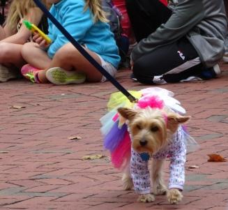 fairy dog