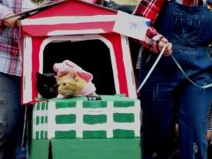farm cats 2