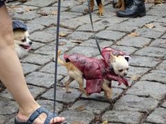 jurassic park dogs 2