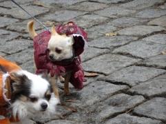 jurassic park dogs