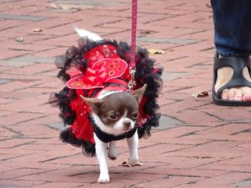 lady bug dog 2