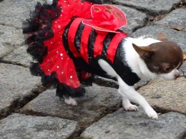 lady bug dog