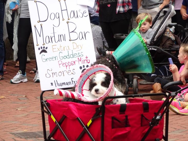 martini bar dogs