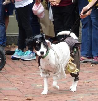 pirate dog 3