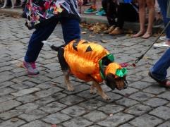 sparkle pumpkin dog