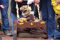 ups dog 2