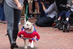 wonderwoman dog 2