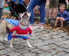 wonderwoman dog